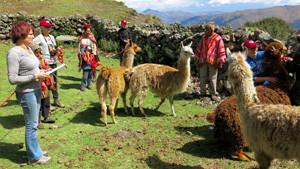 Llama_Pack_Project_8